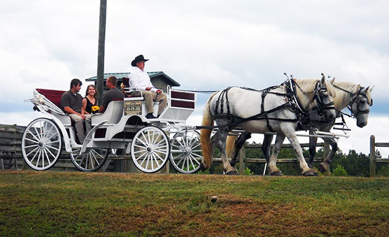 Horse Drawn Carriage Fairfax