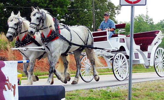 Horse Drawn Carriage Manassas