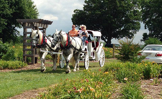 Horse Drawn Carriage Woodbridge