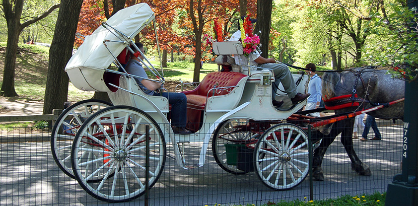 Horse drawn carriage ride in Gainesville